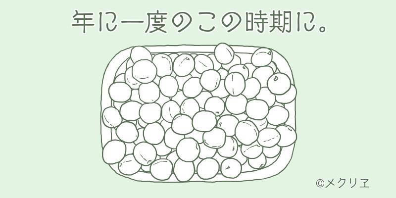 梅干しを作るのは、年に一度のこの時期にまとめて仕込む。